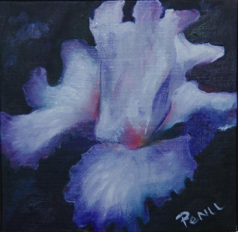 Petit iris