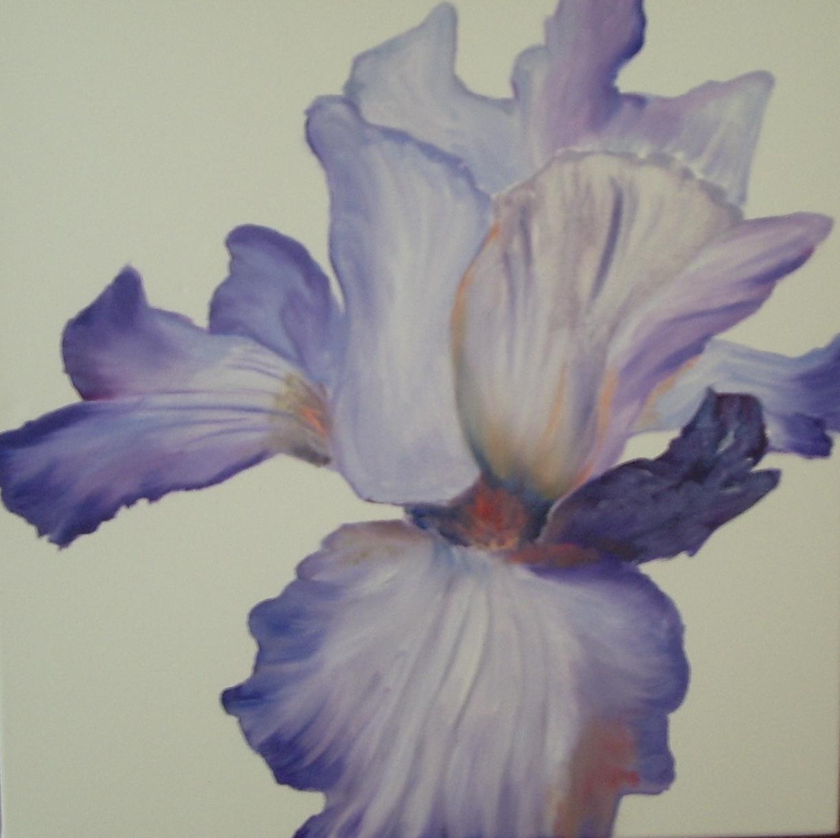 Iris de Solange
