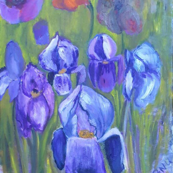 Iris au jardin 2